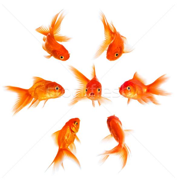 Akvaryum balığı onaylamama kalabalık grup takım altın Stok fotoğraf © cookelma