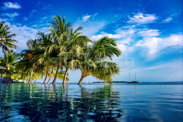 Maldivler plaj tropikal su deniz yeşil Stok fotoğraf © cookelma