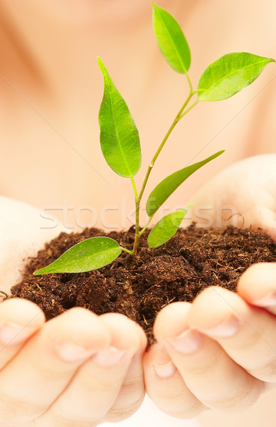 Stock photo:  young plant.