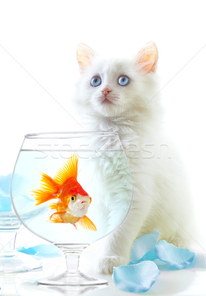 kitten and fish Stock photo © cookelma