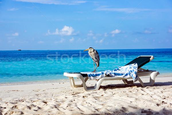 Grey Heron on a sun lounger Stock photo © cookelma