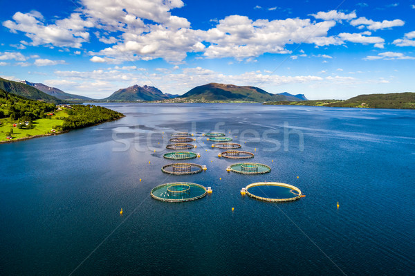 Stock photo: Farm salmon fishing