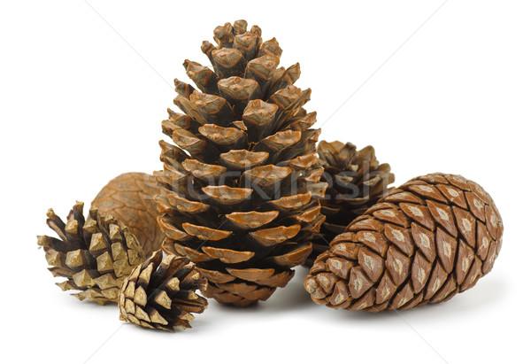 Conifer cones Stock photo © coprid