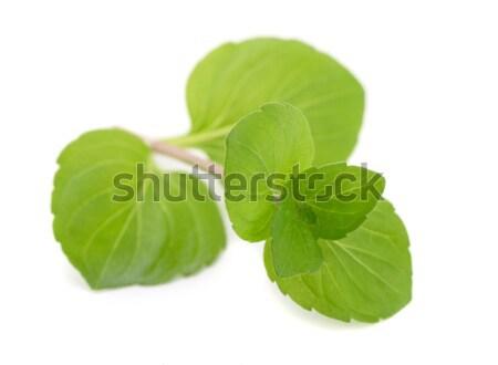 Menta levelek friss izolált fehér levél Stock fotó © coprid