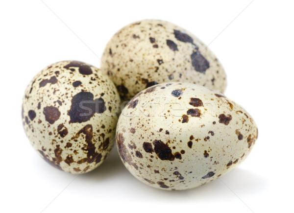 Quail eggs Stock photo © coprid