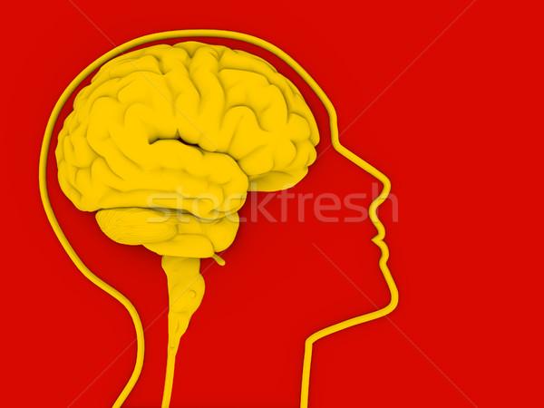 Agy emberi fej 3d render illusztráció oktatás Stock fotó © coramax