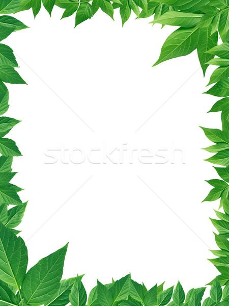 Zöld levelek keret szép képkeret ökológia tavasz Stock fotó © cosma