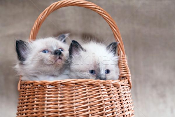 корзины Nice небольшой плетеный холст лице Сток-фото © cosma
