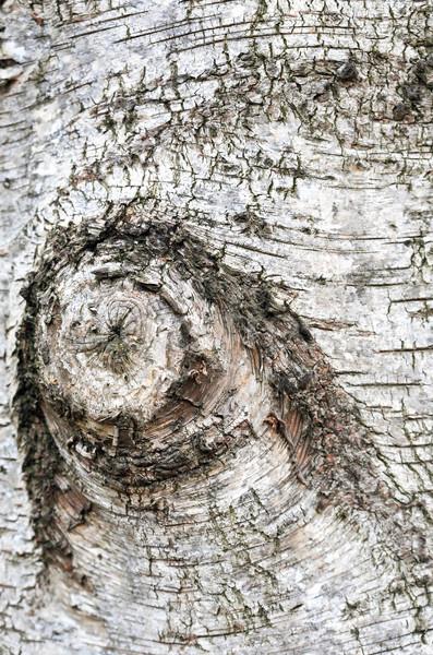 Nyírfa ugatás fából készült extrém közelkép öreg Stock fotó © cosma