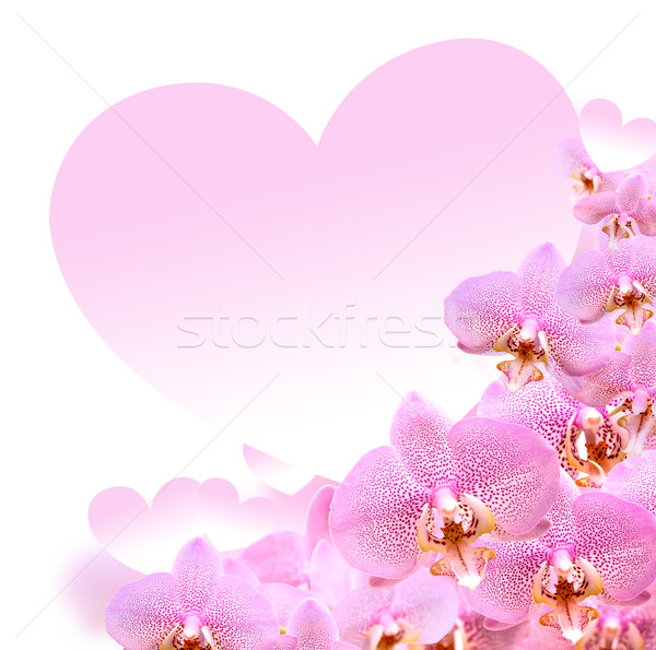 Orchid And Heart Stock photo © cosma