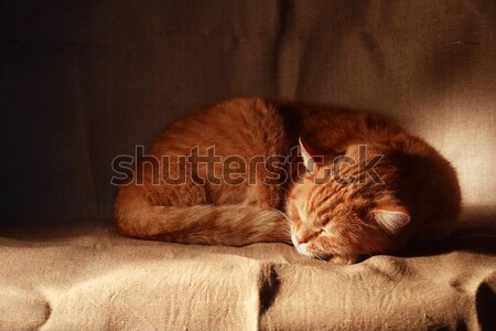 Sweet Dream Stock photo © cosma