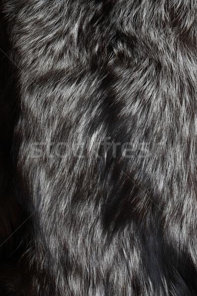 Gümüş tilki kürk doğal güzel Stok fotoğraf © cosma