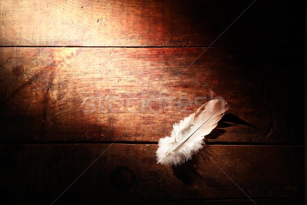 Toll fa madár öreg fa deszka szabad Stock fotó © cosma