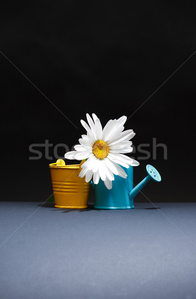 Watering Can And Bucket Near Flower Stock photo © cosma