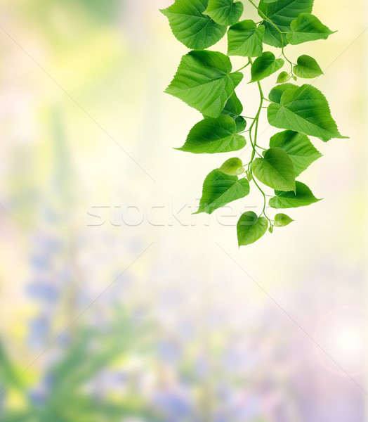 Green Leaves Stock photo © cosma