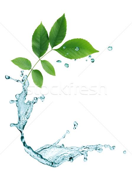 Levelek víz ökológia absztrakt zöld levelek vízcseppek Stock fotó © cosma