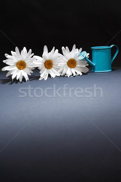 Regador flores jardinagem margarida flor recipiente Foto stock © cosma