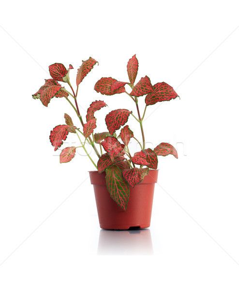 Potted Plant Stock photo © cosma