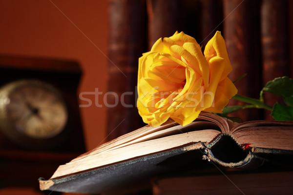 Rózsa könyv klasszikus csendélet gyönyörű citromsárga Stock fotó © cosma