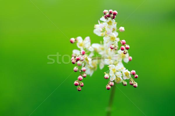 диких цветов Blossom красоту зеленый фон лет Сток-фото © cosma
