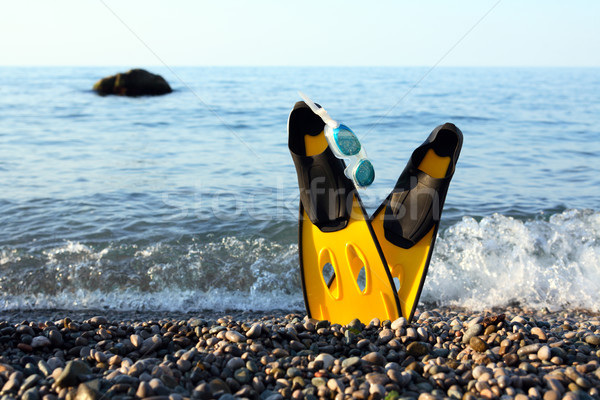 Flippers Near Sea Stock photo © cosma