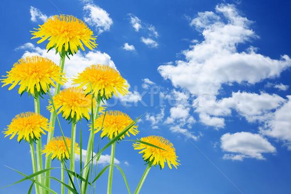 Leão céu poucos belo blue sky nuvens Foto stock © cosma