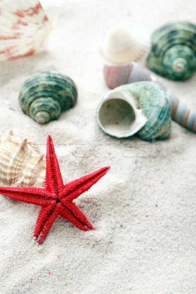 снарядов песок отпуск аннотация морем Сток-фото © cosma