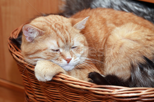 Ginger Cat In Basket Stock photo © cosma