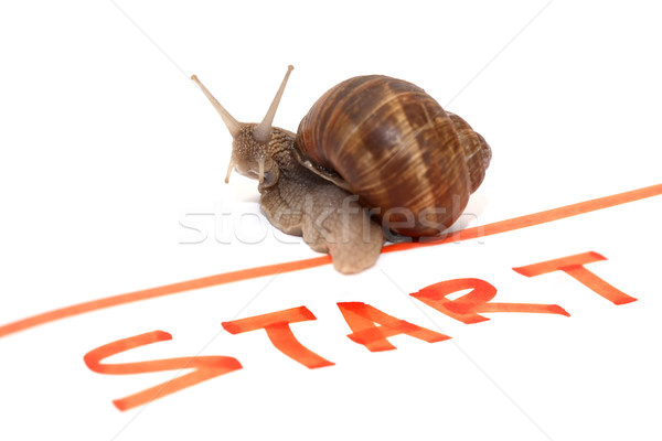 Snail Sportsman Stock photo © cosma