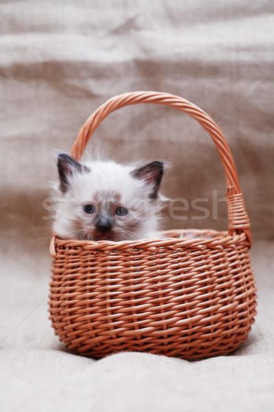 Китти корзины Nice небольшой плетеный холст Сток-фото © cosma