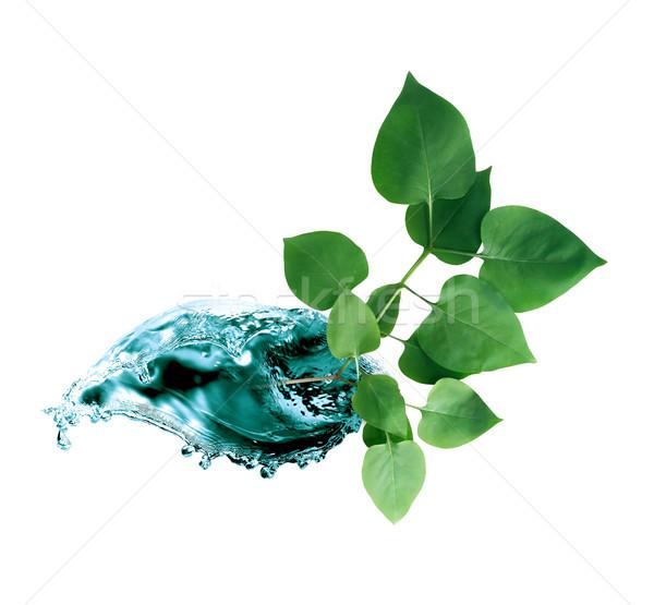 Yaprak ekoloji yeşil yaprakları beyaz soyut Stok fotoğraf © cosma