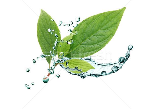 Levelek víz ökológia zöld levelek csobbanás fehér Stock fotó © cosma