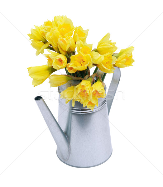 Posy In Watering Can Stock photo © cosma