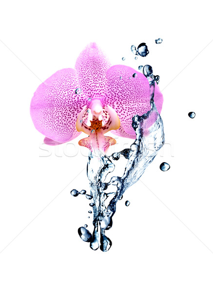 Orchid And Water Stock photo © cosma