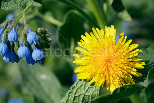 Wildflowers Stock photo © cosma