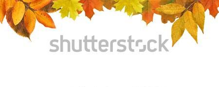 őszi levelek keret szép száraz juhar levelek Stock fotó © cosma