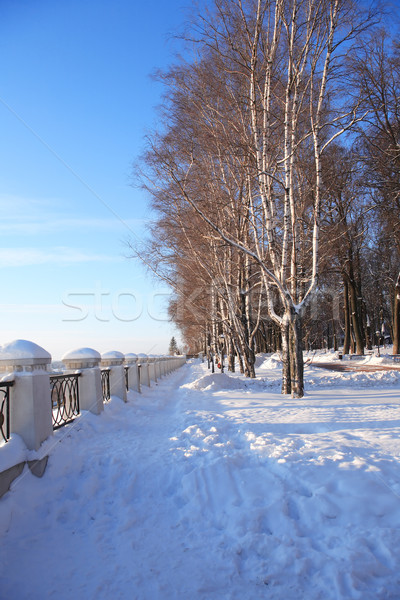Winter Park Under Sun Stock photo © cosma