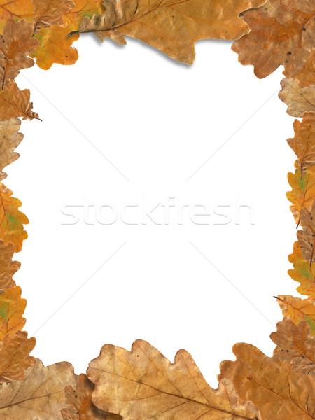 Sonbahar yaprakları çerçeve güzel resim çerçevesi kuru meşe Stok fotoğraf © cosma