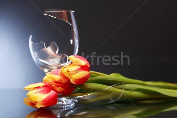 Kırık çiçekler veda bir lale Stok fotoğraf © cosma