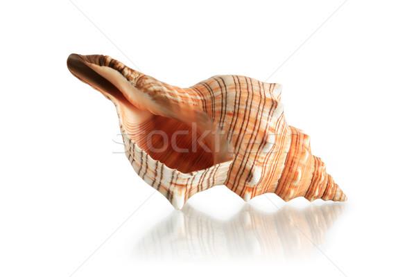 Seashell On White Stock photo © cosma