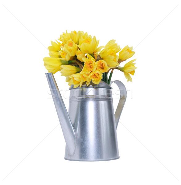 花 じょうろ 黄色 スイセン 金属 孤立した ストックフォト © cosma
