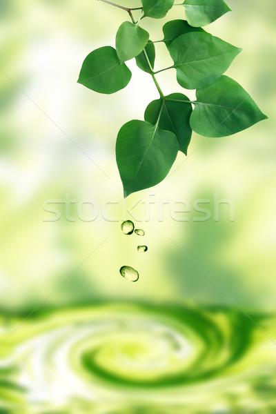 Vízcseppek levelek zuhan frissesség zöld levelek természet Stock fotó © cosma