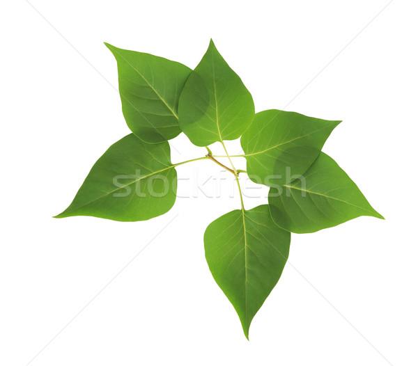 Green Leaves Border Stock photo © cosma