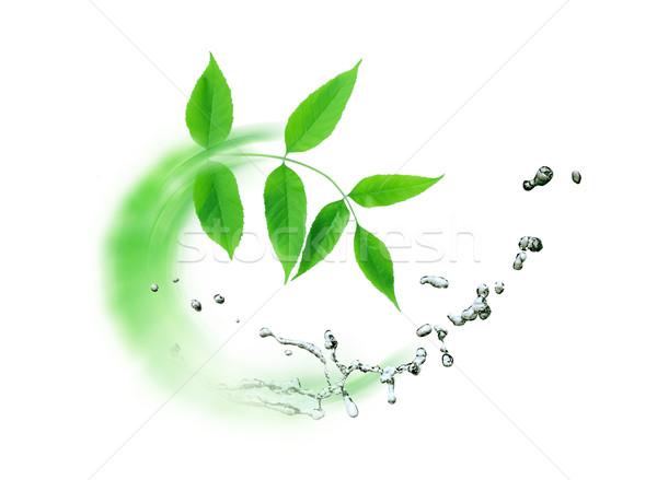 Levelek víz ökológia absztrakt zöld levelek csobbanás Stock fotó © cosma
