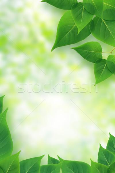 Yeşil yaprakları güzel resim çerçevesi güneş ışığı bahar doğa Stok fotoğraf © cosma