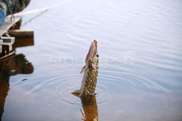 Halászat igazi víz akasztás vonal nyár Stock fotó © cosma