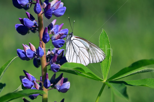 Butterfly On Flower Stock photo © cosma