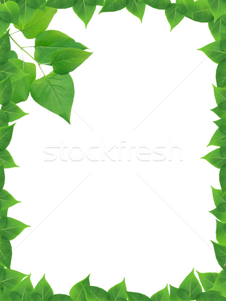 Green Leaves Frame Stock photo © cosma