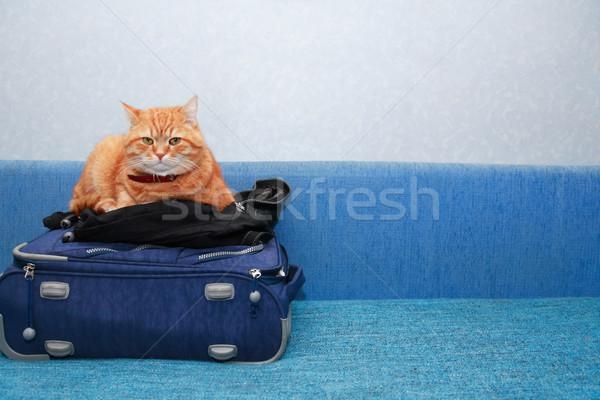 Macska bőrönd utazás szép házi gyömbér Stock fotó © cosma