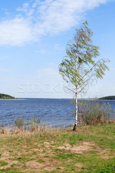 Birch Near Lake Stock photo © cosma